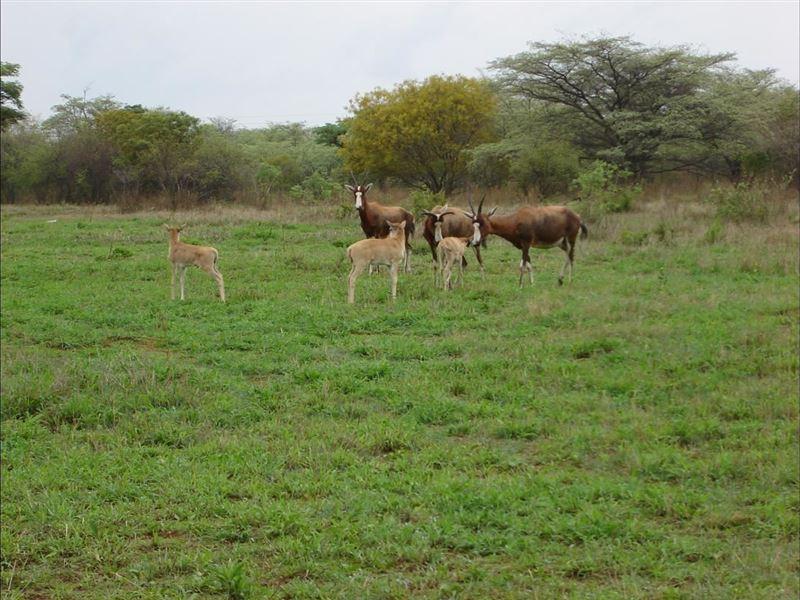 Thaba Lenaka Guestfarm