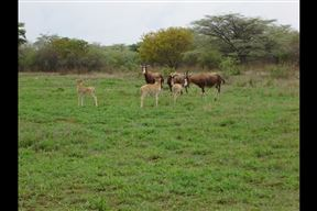 Thaba Lenaka Guestfarm - SPID:1046883