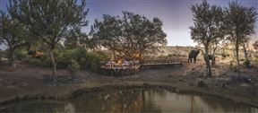 Tuningi Safari Lodge - SPID:107506