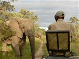 B&B11799 - Limpopo Province