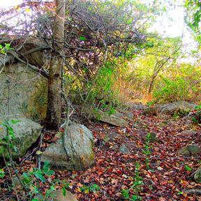 Stonecrop Lodge