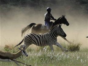 Horizon Horseback Photo