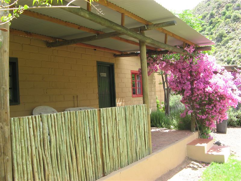 pet friendly Montagu