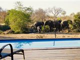 Masodini Private Game Lodge-123311