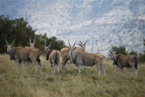 Letsatsi Private Game Reserve