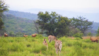 Things to do in Cradle of Humankind
