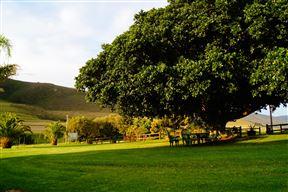 Mount Ingwe Lodge - SPID:1346095