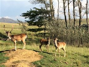 Klaarfontein Guest Farm