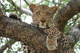 Mohlabetsi Safari Lodge image6
