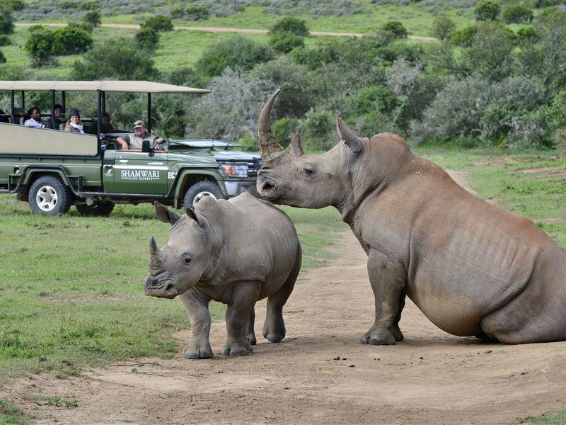Shamwari Private Game Reserve - SPID:1488