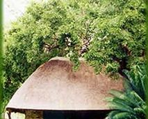 Kwa Thabeng Bush Camp