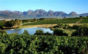 Under Oaks - The Vineyard Suites