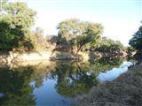 B&B1641115 - Bushveld