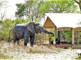 Honeyguide Tented Safari Camp
