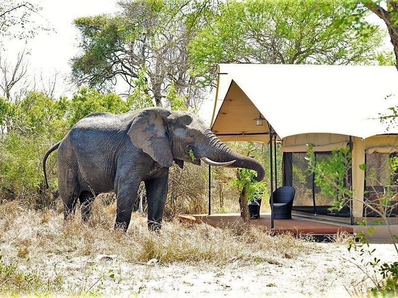 Honeyguide Tented Safari Camp - Khoka Moya