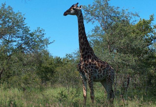Absolute Safari Guest Lodge