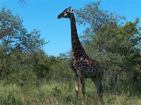 Absolute Safari Guest Lodge - SPID:169551