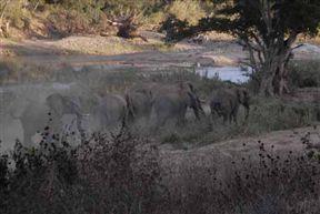 Sangasava - Self-Catering Accommodation Near Kruger National Park image2
