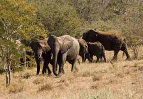 Sangasava - Self-Catering Accommodation Near Kruger National Park image0