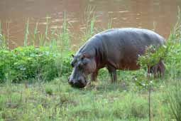 Sangasava - Self-Catering Accommodation Near Kruger National Park image1
