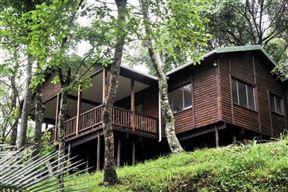 Forest Bird Lodge - SPID:1836172