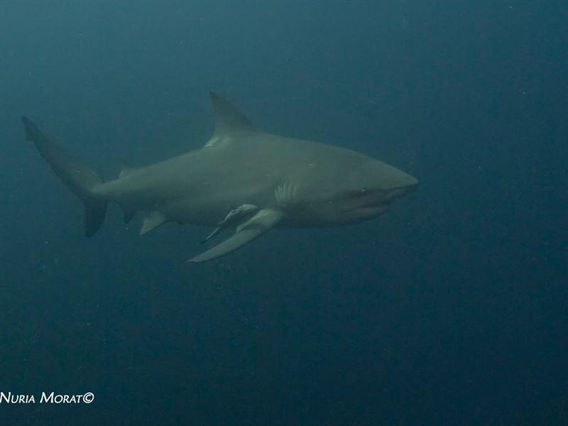 Blue Ocean Dive Resort Umkomaas Your Cape Town South