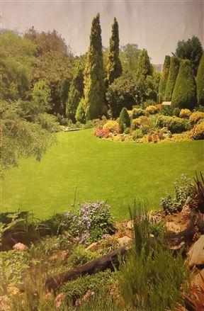 King's Garden Photo