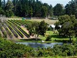 Luka Wine Estate