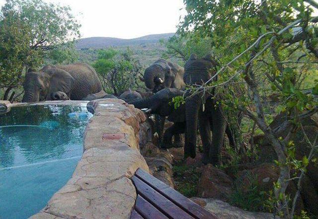 Ngululu Bush Lodge