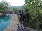 Ngululu Bush Lodge-2300583