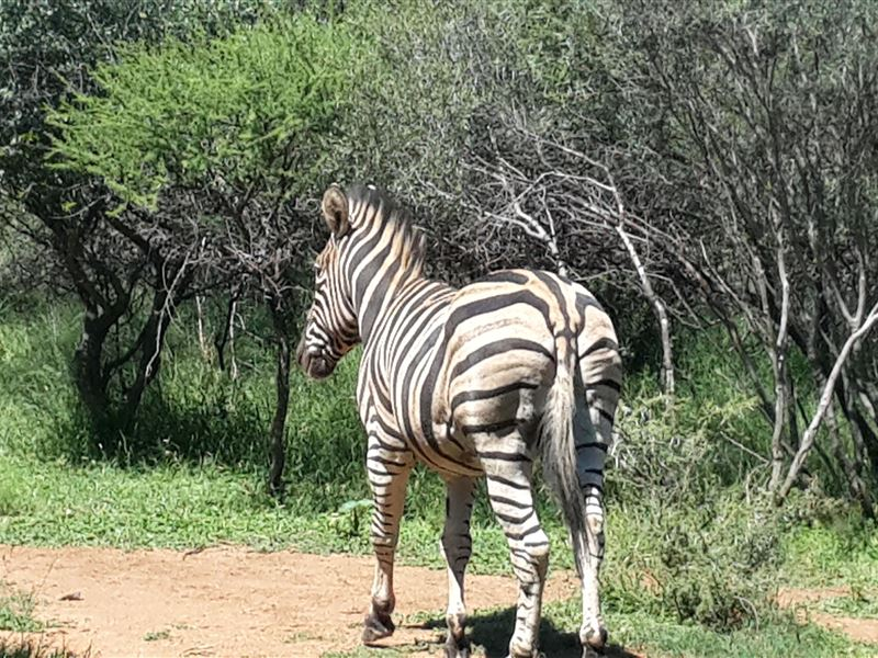 pet friendly Mabalingwe Nature Reserve
