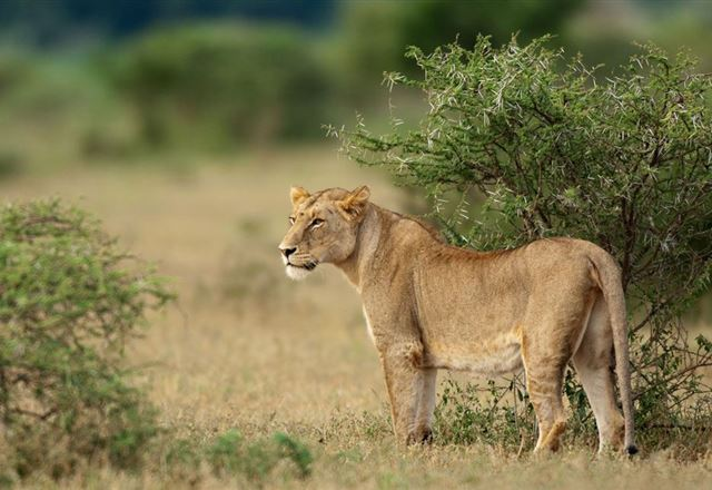 5 Night Great Wildlife Expedition (JHB to DBN)