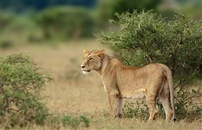 5 Night Great Wildlife Expedition (JHB to DBN) - SPID:2540653