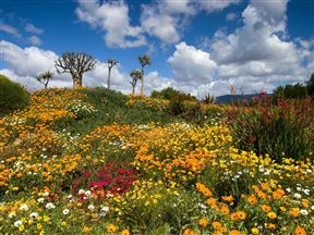 3 Night, 4 Day Extraordinary Wild Flower Adventure