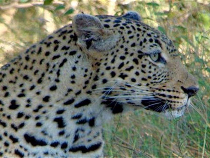 2 Night Just Safari Get Away to Kruger Park