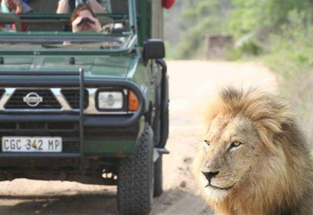 4 Night Kruger Park Safari and Activities Tour
