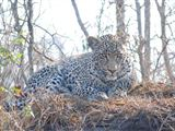 2 Day Leopard Crawl Tour