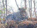 2 Day Leopard Crawl Tour -2636909