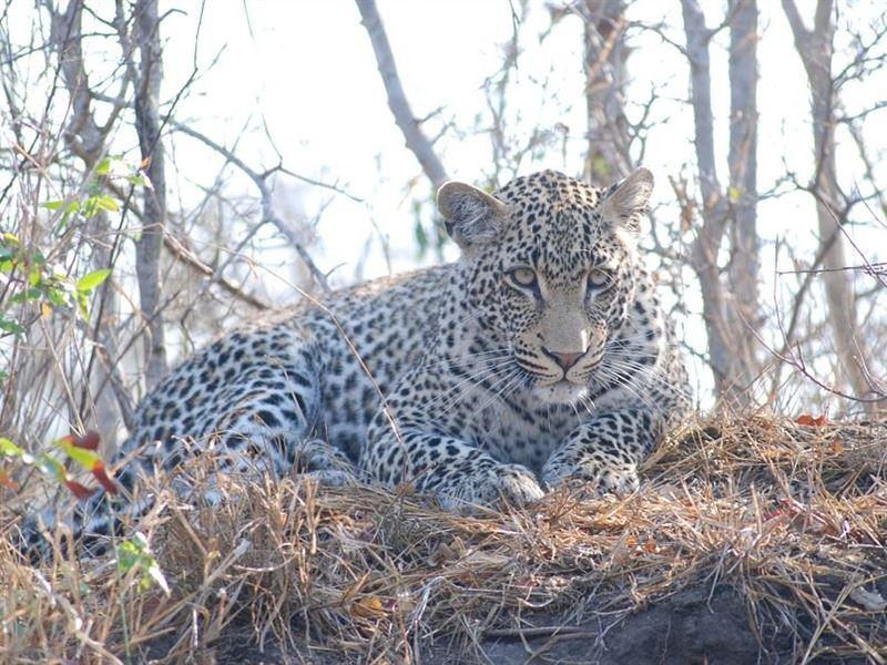 2 Day Leopard Crawl Tour