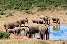 3 Day Elephant Trumpets Tour - SPID:2637278