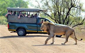 2 Night, 3 Day Marc's Treehouse Kruger Safari - SPID:2638649