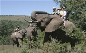 2 Night Elephant Safari Package