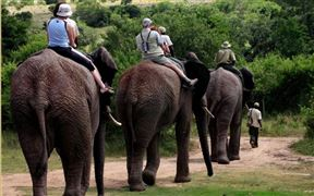3 Night Elephant Safari Package