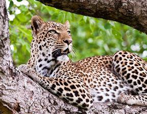 2 Night Thaba Khaya Safari Package Photo