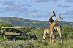 Accommodation at 1 Night Shamwari Safari Package