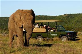 Accommodation at 2 Night Shamwari Safari Package