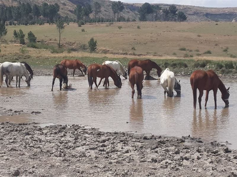 2 Nights Horse Riding Package at Shumba Valley, Fouriesburg, Eastern Free State 3