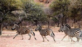 Pay 4, Stay 5 Thaba Khaya Safari Package Photo