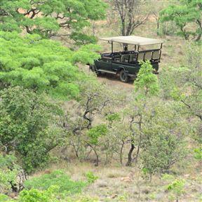 Mangwa African Safari - SPID:2831211