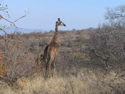 Waterberg Wilderness Reserve image2